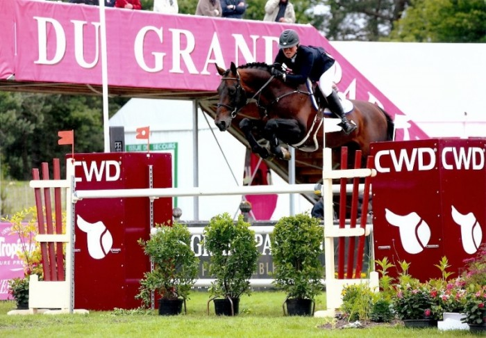 Elvis Ter Putte-offspring triumphs in SBB competition for young horses