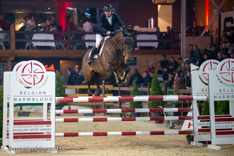 De Muze stallions' offspring impressive at BWP Stallion approvals