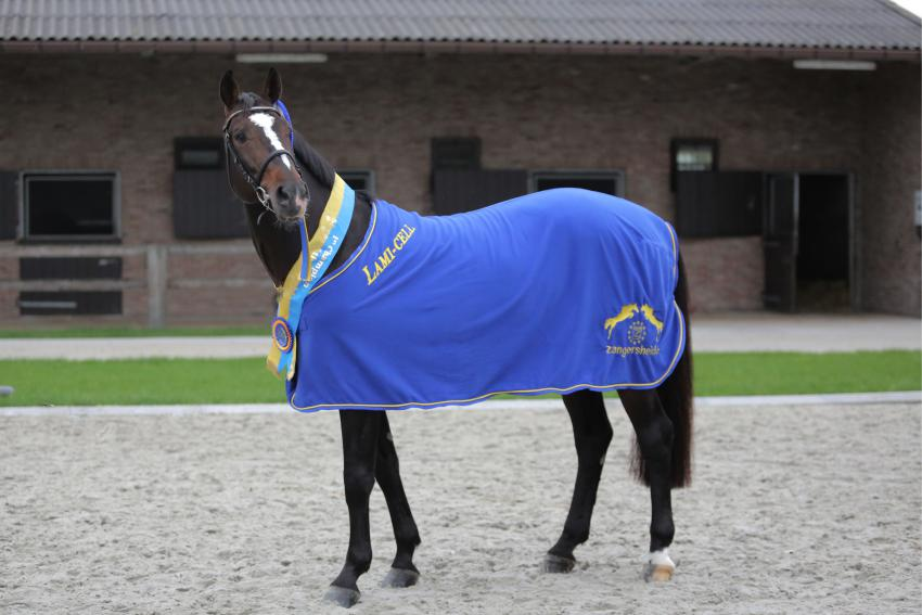 Breeding with Stal de Muze stallions remains possible